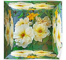 Old Fashioned Yellow Rose - Mirror Box Poster
