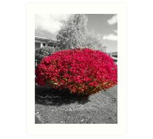 Colorized Burning Bush Art Print