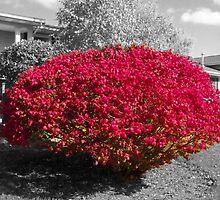 Colorized Burning Bush by heatherlynn