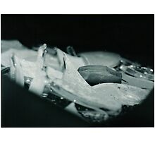 Still Life #2 Photographic Print