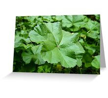 Mallows (available in ipad case) Greeting Card