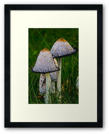 Cosy fungi by Nicole W.