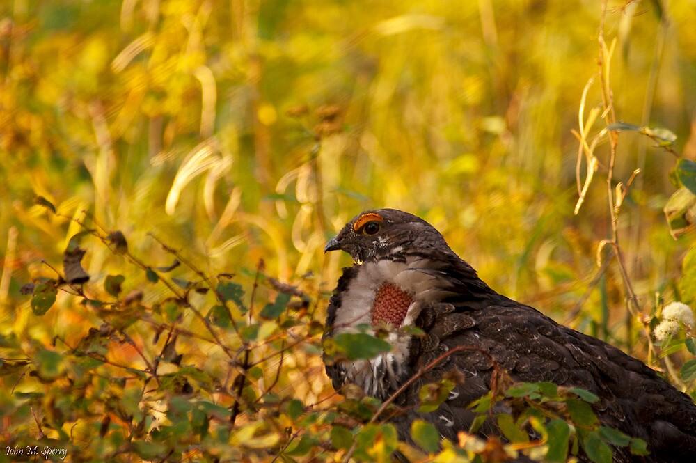 Prairie Chicken by John  Sperry