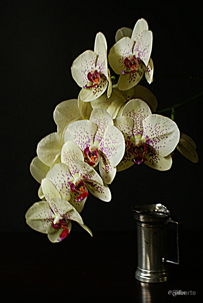 Phalaenopsis with pewter pitcher. by Gilberte