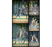 Boxing Kangaroos at Woodgate Beach Photographic Print