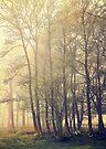 Quiet Morning by Svetlana Sewell