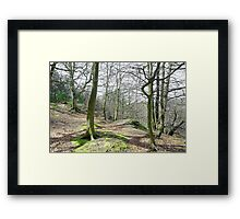 Trees in Cotton Dell  Framed Print