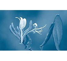 A Paler Shade of Blue Photographic Print