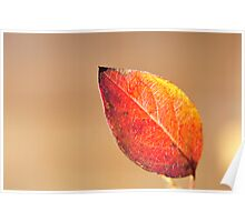 The colour of autumn Poster