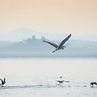 Making a quick exit, Lago Trasimeno, Umbria by Andrew Jones