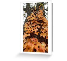 Vine of Orange Leaves  Greeting Card