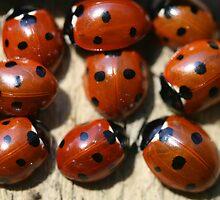 Ladybirds by Hannah Welbourn