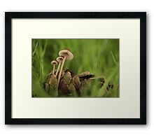 Clustered Pine Cone Bonnet mushrooms by pinecone  Framed Print