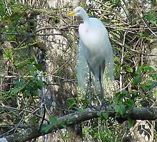 White Egret by Penny Rinker