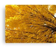 Golden auras Canvas Print