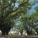 MCC Mossman Raintrees by Mossman  Community Centre