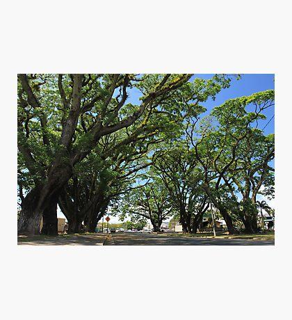 MCC Mossman Raintrees Photographic Print