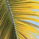 MCC Palm by Mossman  Community Centre