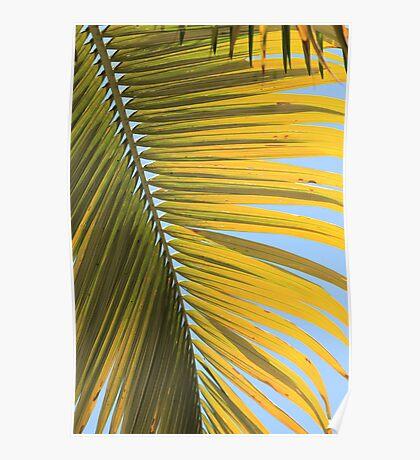 MCC Palm Poster