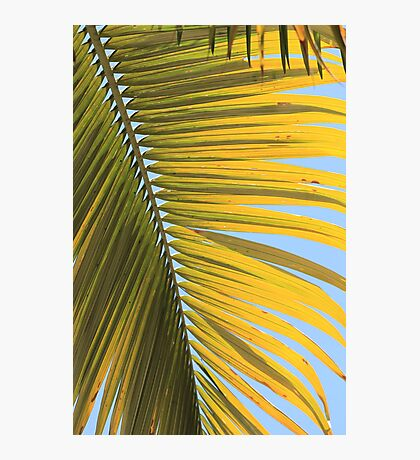 MCC Palm Photographic Print