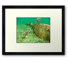 MCC Turtle Great Barrier Reef Framed Print