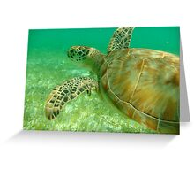 MCC Turtle Great Barrier Reef Greeting Card