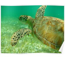 MCC Turtle Great Barrier Reef Poster