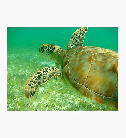 MCC Turtle Great Barrier Reef Photographic Print