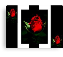 Bold & Beautiful Canvas Print
