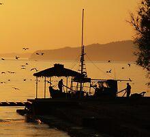 Begging Seagulls....Benitses, Corfu by Sarah-jane Monro