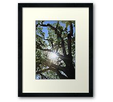 MCC Sun Star Framed Print