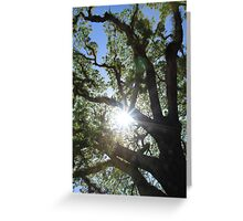 MCC Sun Star Greeting Card