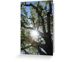 MCC Sun Star Greeting Card