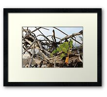 MCC Entangled Lives Framed Print