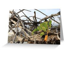 MCC Entangled Lives Greeting Card