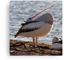 """""""A Mouth Full of Pelican"""" Canvas Print"""