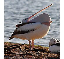 """""""A Mouth Full of Pelican"""" Photographic Print"""