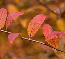 Autumn Shrub by Eunice Gibb
