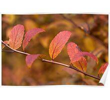 Autumn Shrub Poster