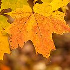 Autumn Leaves by Eunice Gibb