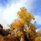 Golden Wild by Arla M. Ruggles