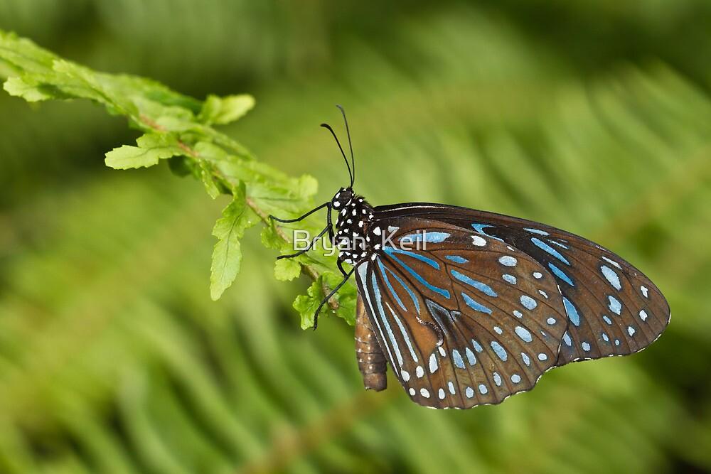 Dark Blue Tiger by Bryan  Keil