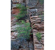Sheep on a cliff Photographic Print