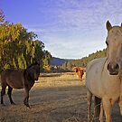 Autumn Horse by Marcus Angeline