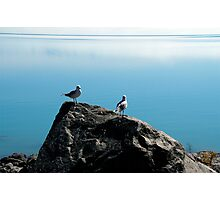 Gull on rock Photographic Print