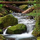 Ohanapecosh Creek by Marcus Angeline