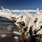 Moeraki tree by Kyra  Webb