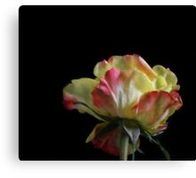 A rose by any name Canvas Print