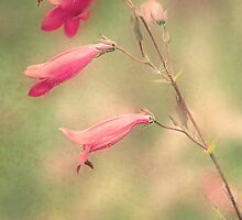 Vintage pink flower by Dawn Cox