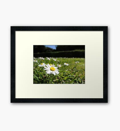 One in a million - Daisy Framed Print